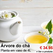 �rvore do ch� - Planta em vaso de 4 litros - 34.95 €