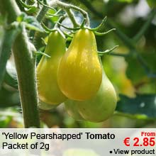 Tomato seeds - 'Yellow Pearshapped' Tomato - From 2.85 €