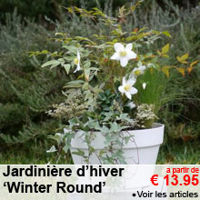 Jardinière d'hiver 'Winter Round' - a partir de 13.95 €