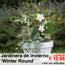 Jardinera de invierno 'Winter Round' - a partir de 13.95 €
