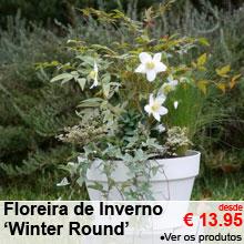 Floreira de Inverno 'Winter Round' - desde 13.95 €