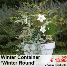 Winter Container 'Winter Round' - from 13.95 €
