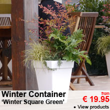 Winter Container 'Winter Square Green' - from 19.95 €