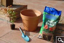 Plantation en Bac, Pot ou Jardinière