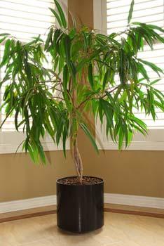 Arrosage des plantes d 39 int rieur ou en pot for Grande plante en pot exterieur