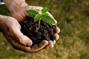 A cada planta, as suas necessidades