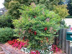 Plantar arbustos for Arbustos jardin pequeno