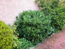 Los arbustos - Plantas y arbustos de exterior ...