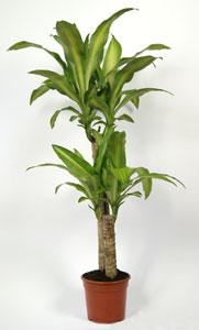 Les plantes d 39 int rieur mode d 39 emploi for Plantes exotiques d interieur