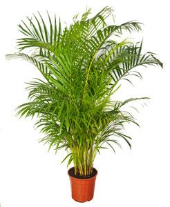 Les plantes d 39 int rieur for Plantes exotiques d interieur
