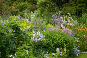 Que planter dans un massif de fleurs for Creer un massif de plantes vivaces