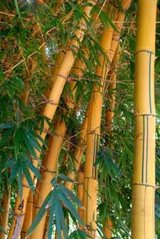 Las plantas herbáceas