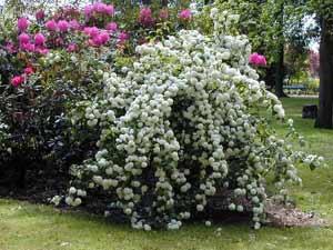 Os arbustos