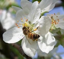 Flores y el polen