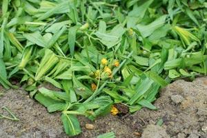 Quelques conseils pour débutantes: ( jardinage ) - Page 2 Gerer-ses-dechets-verts_01