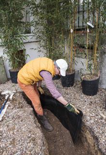 Plantation d 39 une haie de bambou - Arrosage bambou exterieur ...