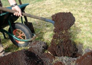 Plantation En Pleine Terre De Vos Arbres Et Arbustes