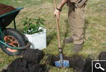 Plantación de Plantas en Cepellón o Contenedor