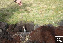 Planting bare rooted plants
