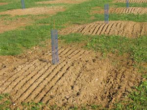 Truffle Plantation