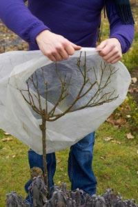 Proteger as plantas do frio