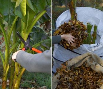Prot ger les plantes du froid for Couvrir les plantes en hiver