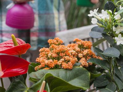 plante interieur hiver