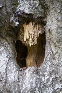 comment reparer une branche d'arbre cassee