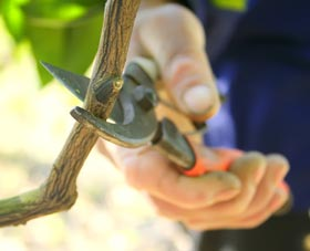 Know everything about pruning