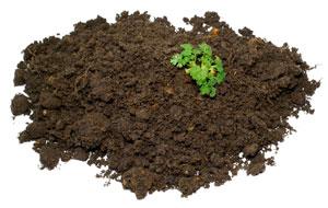 Tierra - La arena, ligera y pobre