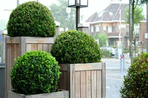 The art of Topiary - How to prune a ball