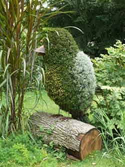 The art of Topiary - Pruning a shape
