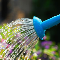The art of watering