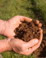 Characteristics of your garden