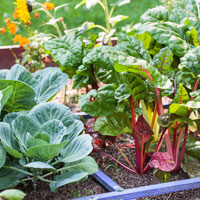How to succeed at vegetable gardening