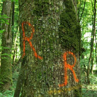 Forestry Markers