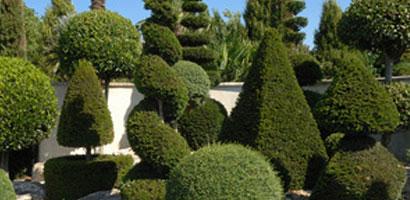 Plantes sculpturales