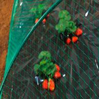 Protección cultivos de frutas y verduras