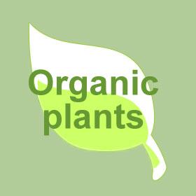 Plantes pour jardinière d'hiver