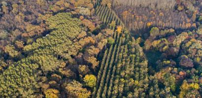 Plantas florestais
