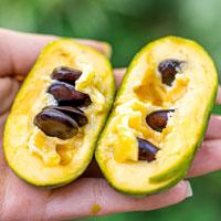 Frutas exóticas e Plantas cítricas