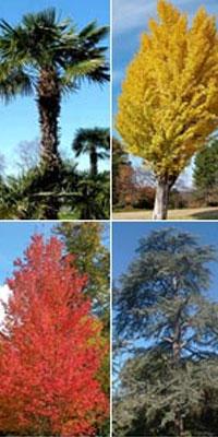 Árvores de grande porte