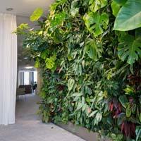 Plantes pour mur végétal intérieur
