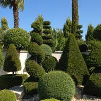 Plantas esculturais