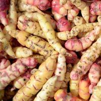 Tubercules et Racines comestibles