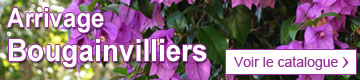 Catalogue bougainvilliers