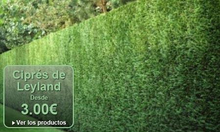 Viveros y jardiner a online planfor for Vivero online arboles