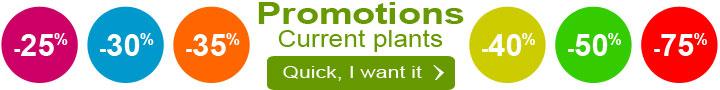 current plants promotions