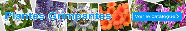 Je découvre le catalogue des Plantes grimpantes