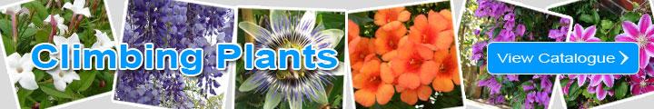 Discover the Climbing Plants Catalogue
